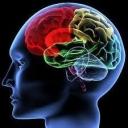 https://www.ei-psychology.org/images/avatar/group/thumb_9509243633b972c0b60b6c289c7d211a.jpg